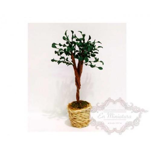 Tree in wicker pot