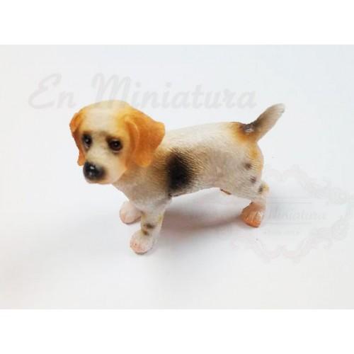 Beagle dog standing