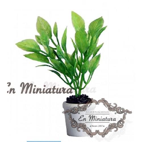 Plant, pot