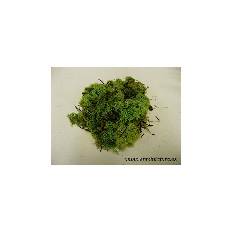 Bolsa de musgo verde
